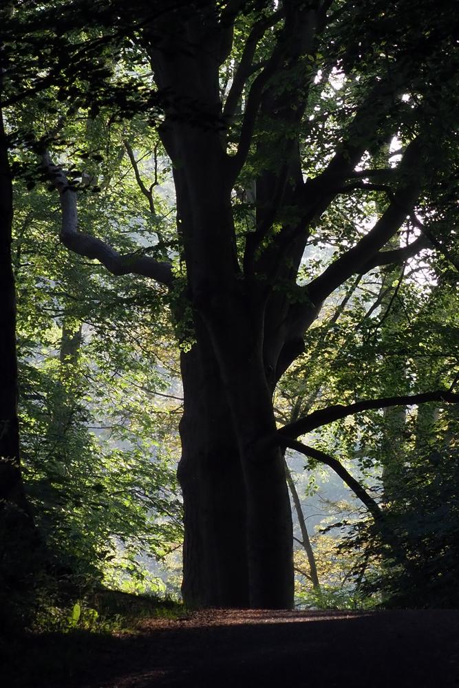 Frank Deden Natuurfotografie